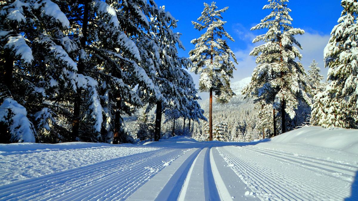 Prepared cross country ski-tracks